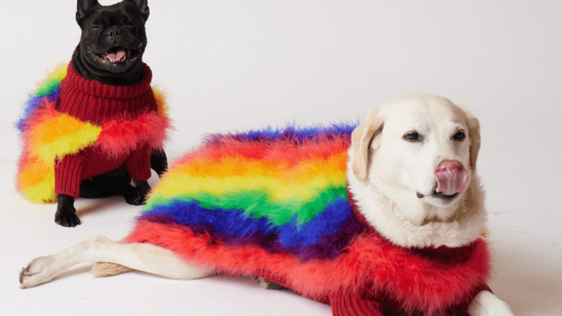 Photos of Pride Month Inspired Dog Accessories